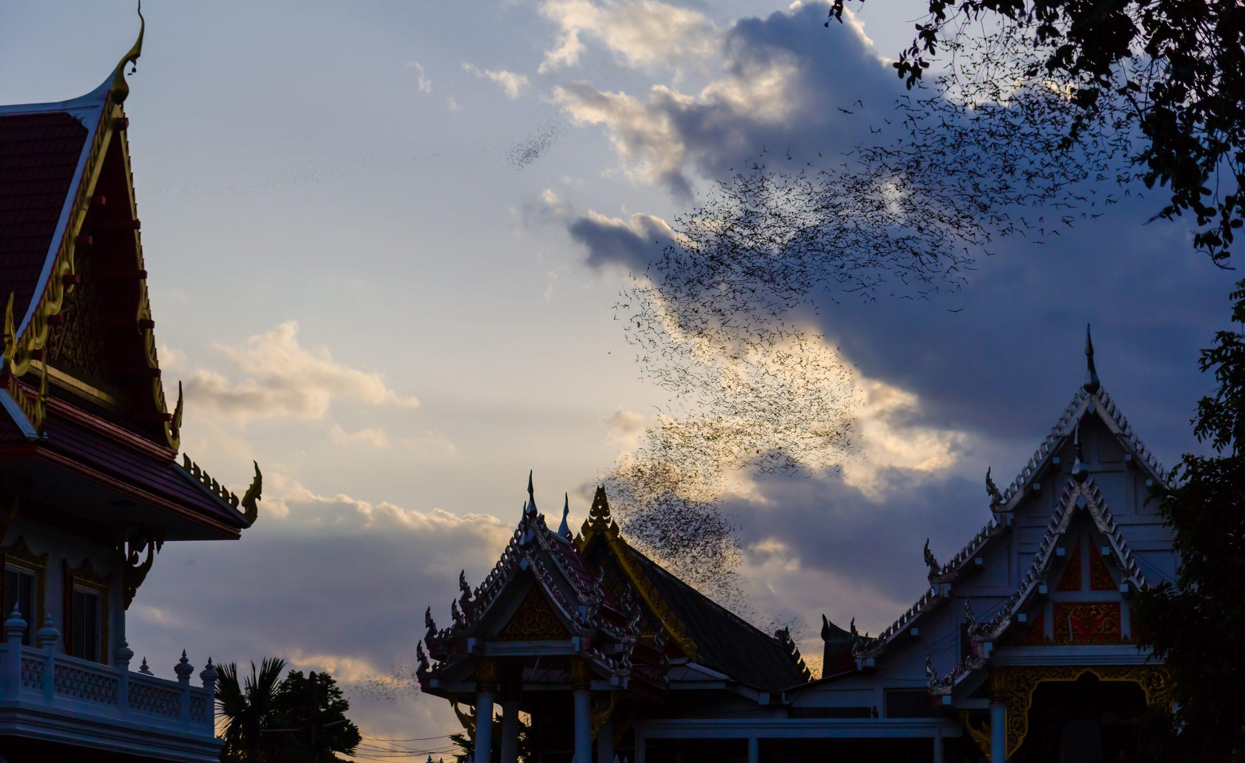 Hundred Million Bats at Wat Khao Chong Pran, Ratchaburi Thailand