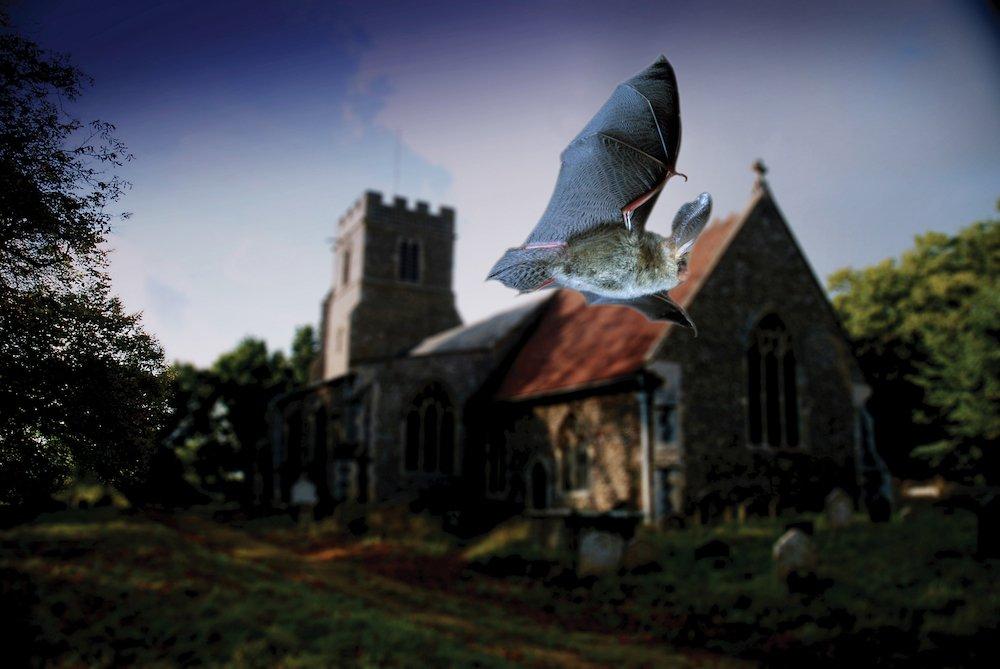 (c) Hugh Clark/www.bats.org.uk